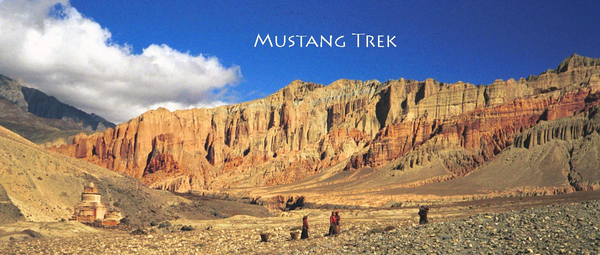 Lo Pas In Mustang